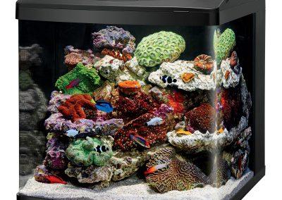 Bio Cube Aquariums