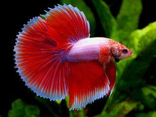 discount aquarium fish and reef saltwater fish store in tempe