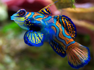 discount aquarium fish and reef saltwater fish store in tempeAquari And Fish Pic #12