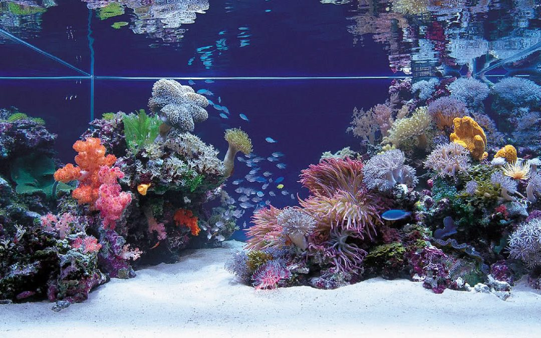 Understanding Reef Aquarium Water Testing and Dosing