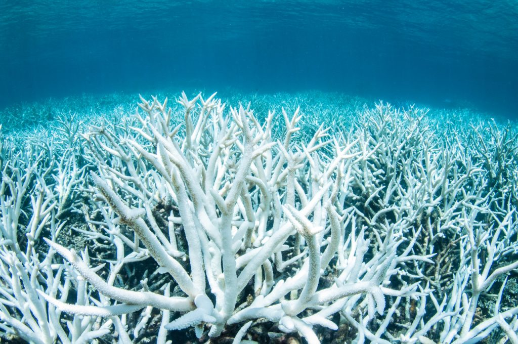 Coral Bleaching in the Ocean