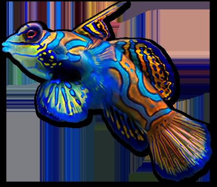 Discount Aquarium Fish And Reef Saltwater Fish Store In Tempe