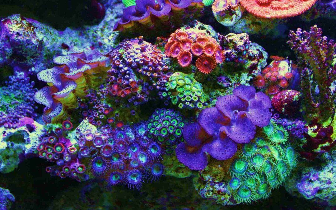 How to Maintain a Stable Reef Aquarium